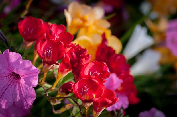 7 spring flowering bulbs to plant now mightylinksfo