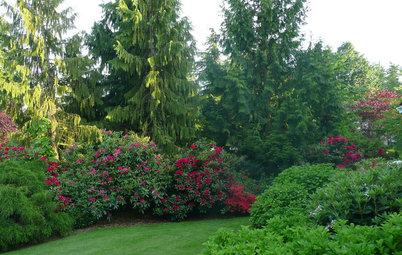Rododendro: El árbol de las rosas