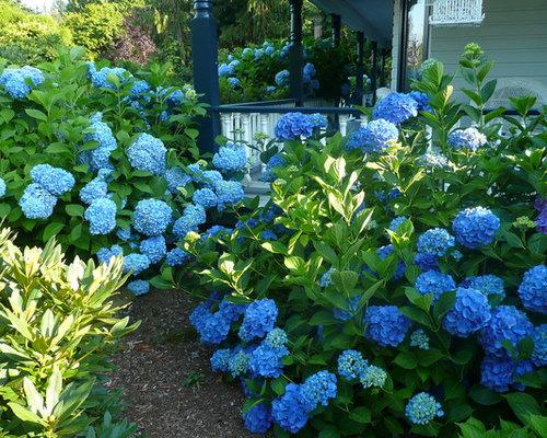 Dwarf blue hydrangeas home design ideas pictures remodel for Garden designs with hydrangeas