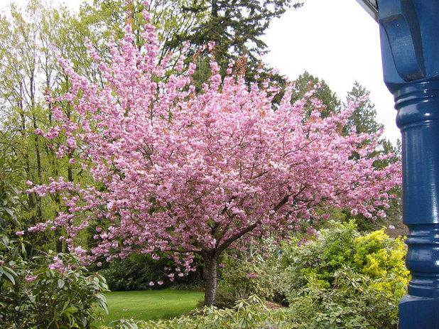 Cherry blossom pink romances rooms for Arboles que dan sombra para jardin