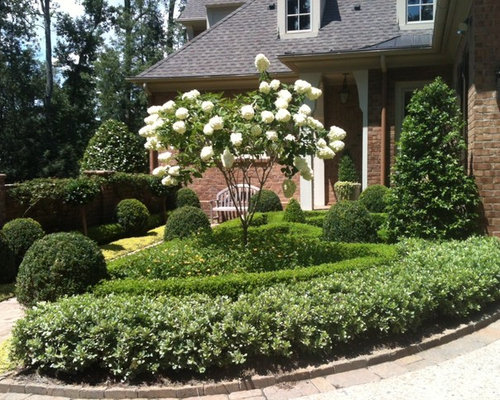 Ligustrum topiary home design ideas pictures remodel and for Wax landscape
