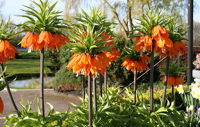 Plant Fritillary Bulbs for Something a Little Different