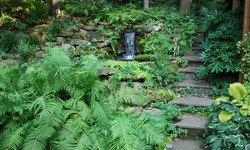 Front Garden, July 2011