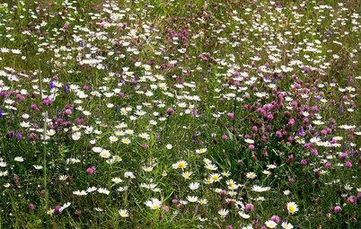 Pflegeleichte Wildblumenwiese im Garten – 7 Tipps