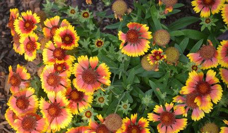 8 plantas de exterior resistentes al sol que te interesa conocer