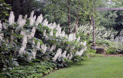 Great Design Plant: Aesculus Parviflora