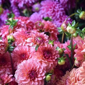 G A R D E N - Cut flower farms + gardens