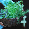 Extreme Herbs: 5 Ways to Give Homegrown Herbs More Flavour