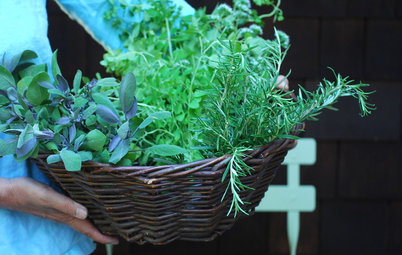 Extreme Herb Gardening for Extreme Flavor