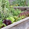 Test dig selv: Hvilke planter skal du vælge?