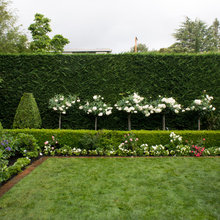 Take Care of Your Hedges With These Pruning Pointers