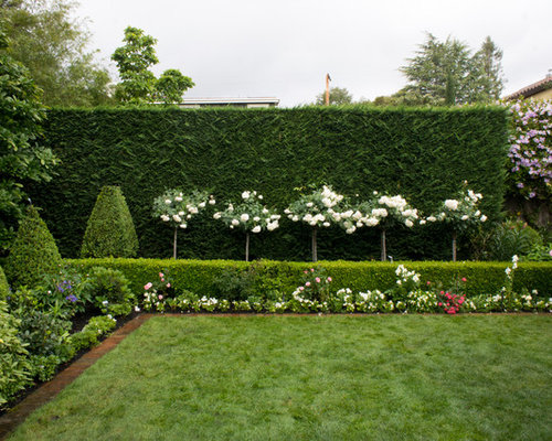 Evergreen screening shrubs houzz for White house rose garden design