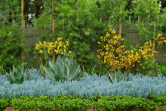 Block Out Thy Neighbour: Privacy Plants for the Modern Home 2bd1f19f0f457c6e_5262-w660-h443-b0-p0--modern-garden