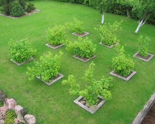 Gardening Fruit Trees | Houzz