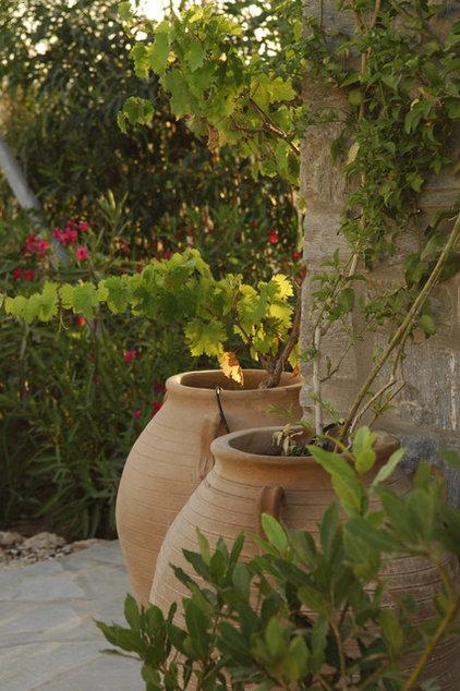 Mediterranean Landscape by Carolyn Chadwick