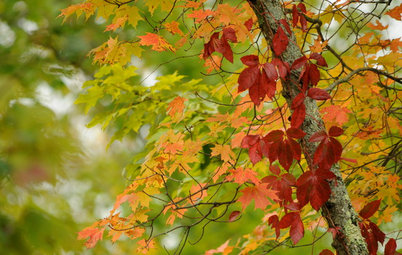 Fall on the Wall: Decorating With Rich Reds, Browns and Oranges