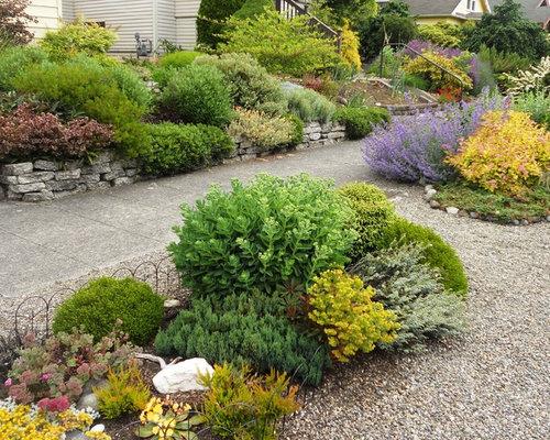Magic Carpet Spirea Panion Plants - Carpet Vidalondon