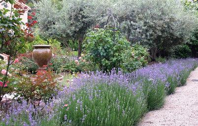 Fleurissez votre allée avec des plantes de bordure