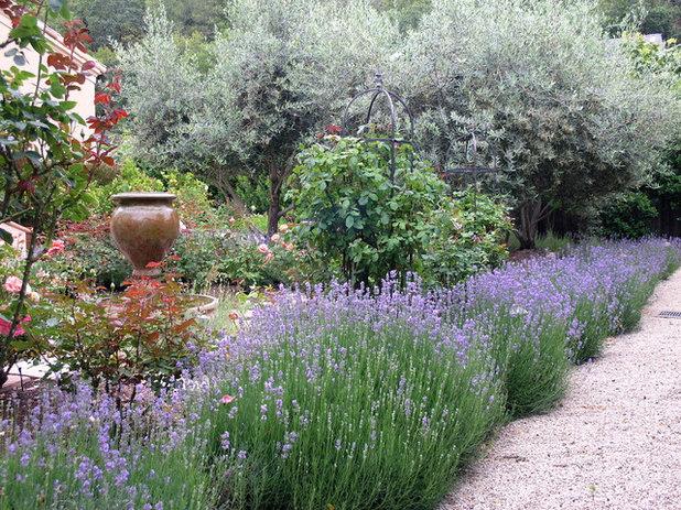 Fleurissez votre all e avec des plantes de bordure - Plantes pour bordures d allees ...