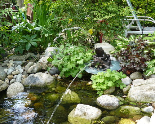 Plants around ponds houzz for Plants around ponds