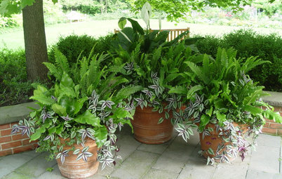 7 Fabulous Shade-Loving Ferns for Containers