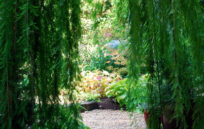 To Make Your Garden Memorable, Add a Hint of Mystery