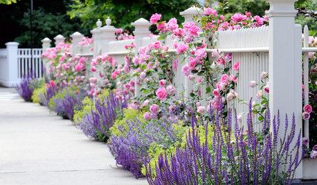 Как правильно: Спланировать цветник на садовом участке