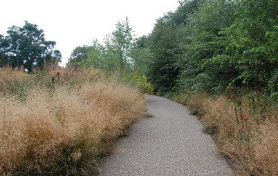 Feathery Tufted Hairgrass Beautifies Gardens Coast to Coast