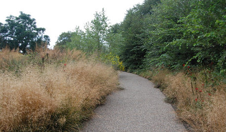 Feathery Tufted Hairgrass Beautifies Gardens Coast to Coast