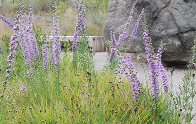 Native Wildflowers for the August Transition Into Fall