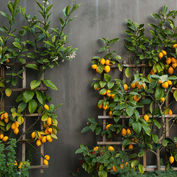 Garden Wall + Trellises