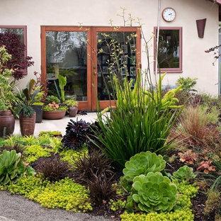 Diseño de jardín actual, en patio trasero, con jardín de macetas