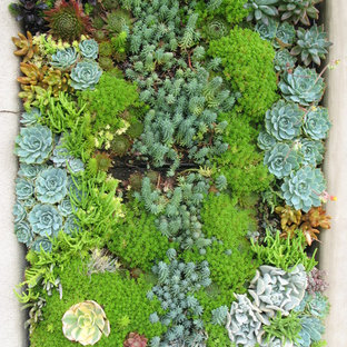 This is an example of a contemporary garden in San Diego with a living wall.