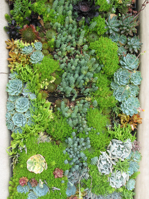Succulent garden home design ideas renovations photos for Garden design with succulents