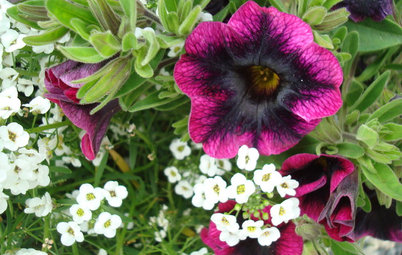 Southeast Gardener: What to Do in July