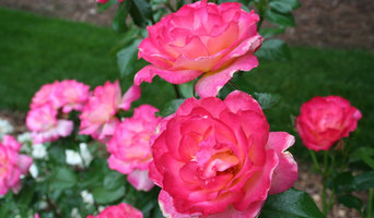 Gardening with Confidence® keeping roses in the green.jpg