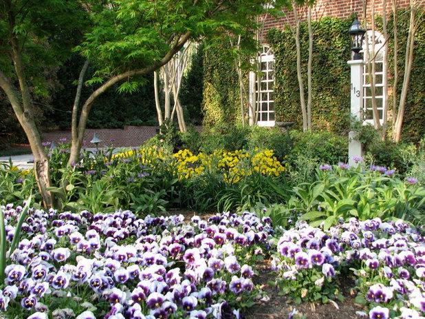 Fleurs du mois violas et pens es pour des couleurs en hiver - Quoi planter en hiver ...
