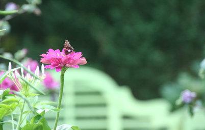 Southeast Gardener's August Checklist