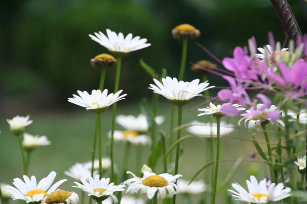 Landscape by Gardening with Confidence®