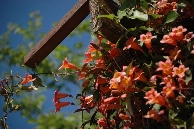 Классический Сад by J. Peterson Garden Design
