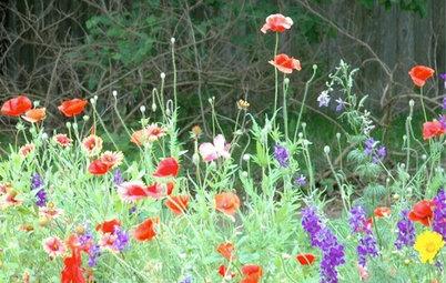 Сад для ленивых: Создание красивого сада, не требующего ухода