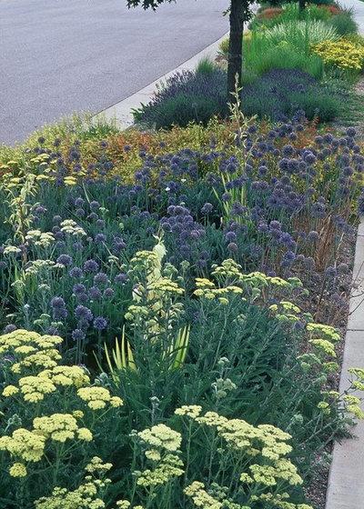 Garden by Lauren Springer
