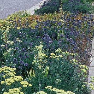 Gardens on Spring Creek hellstrip