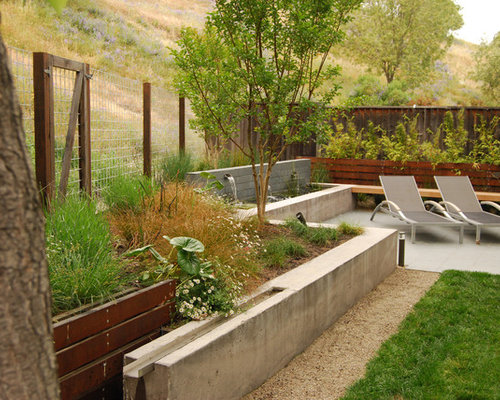 This Is An Example Of A Mid Sized Modern Backyard Formal Garden In San Francisco