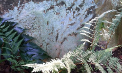Ghost fern and lichens