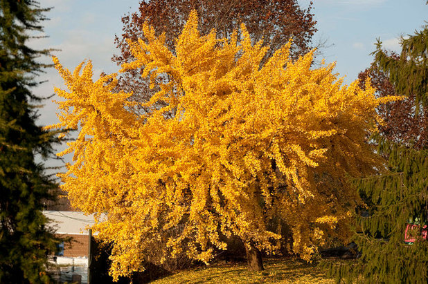 Top 5 trees for fall color in california mightylinksfo