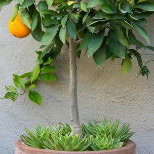 Inspiration för en liten medelhavsstil bakgård i full sol, med utekrukor