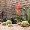 Cultiver des cactus, mode d
