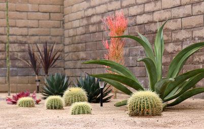 Cultiver des cactus, mode d'emploi