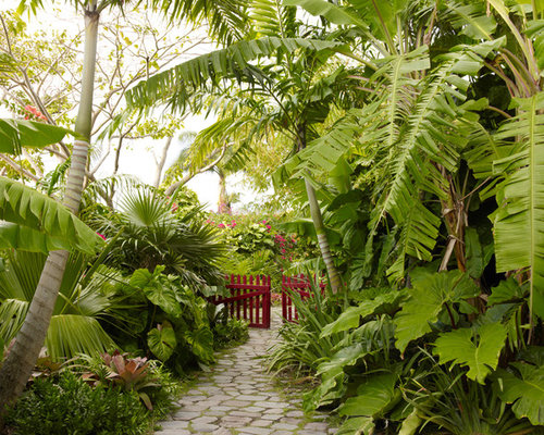 Tropical backyard houzz for Jungle garden design ideas